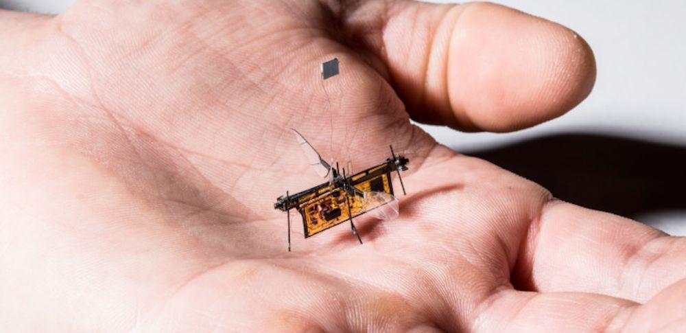 ハエと同程度の小型ロボット「RoboFly」を開発|ワシントン大研究チーム